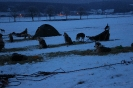 Šediváčkův long 2015